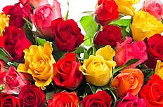 情人节心形玫瑰花图片