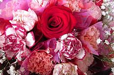 唯美康乃馨花束图片