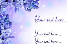 紫色風信子背景圖片