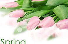 唯美粉色郁金香花图片