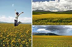 4张油菜花田园风光图片