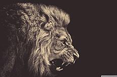 咆哮的獅子壁紙圖片素材