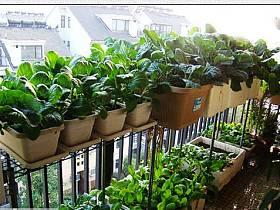自然阳台设计方案
