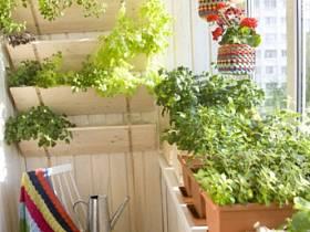 植物设计方案